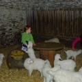 Photos : Printemps à la ferme (2011)