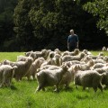Visitez notre ferme en groupe