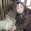 Les enfants participent et donne le grain et le foin