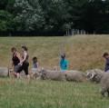 Visite des animaux au champ